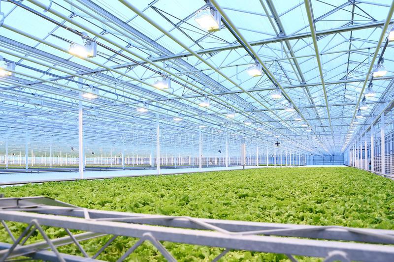 O aumento do mercado de iluminação de crescimento
